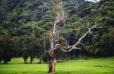 costa-rica-america-tree-environment