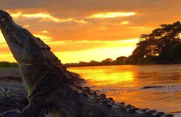 crocodile-tarcoles-river-sunset