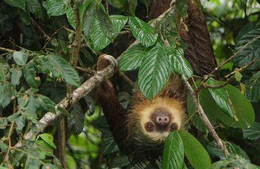 sloth-costa-rica-nature-tropical