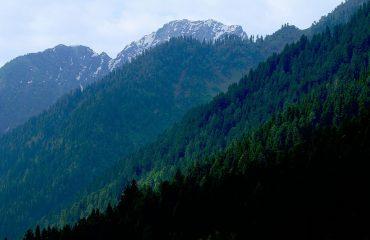 alpsforest