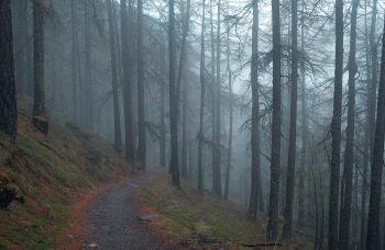 hiking-in-the-rain-forest-1